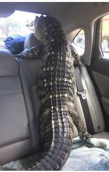 Krokodillejpg